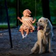 Baby and dog — Stock Photo #52339291