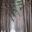 Trail in coniferous forest in winter — Stock Photo #60006219