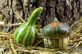 Macro Shot of Two Small Pumpkins on Hay — Foto Stock