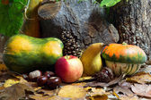 Autumn Still Life with Gourds, Apple, Pear, Chestnuts, Pinecone and Leaves — Stock Photo
