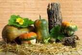 Still-life Arrangement of Gourds on Hay — Stock Photo