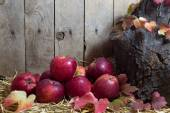 Still Life with Red Apples and Autumn Leaves on a Hay, Wooden Planks Background — Stock Photo