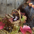 Autumn Still Life with Wicker Basket Filled with Pine Cones, Acorns, Chestnuts, Red Autumn Leaves and Nuts on a Hay, Wooden Planks Background — Stock Photo #56791593