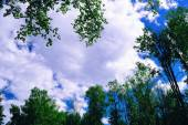 Clouds on a Sky, Framed by Tree Crowns — Stock Photo