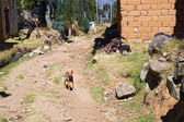 Small dogs guarding  rural settlement — Stock Photo