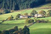 なだらかな丘の農場 — ストック写真