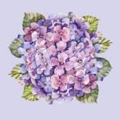 Hydrangea flower watercolor — Stock Photo