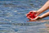 Red starfish in hands, seawater on background — Stok fotoğraf