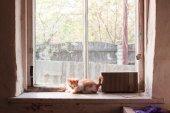 Kitten on windowsill — Stock Photo