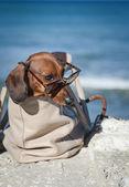 собака таксы с солнцезащитными очками в море — Стоковое фото