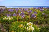 Half Moon Bay in het voorjaar van — Stockfoto
