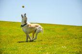Cane che gioca con una palla — Foto Stock
