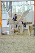 White Wings International Horse Show. Female rider on a white horse. Pegasus. — Stock Photo