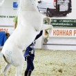 White Horse Moscow Ridding Hall International Horse Exhibition — Stock Photo #56620061
