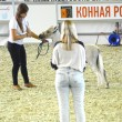 Ridding Hall International Horse Exhibition — Stock Photo #56625703