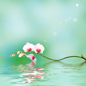 Floral background: white orchid flowers over a backdrop along with reflections in wavy water surface — Stock Photo