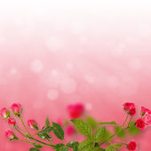 Floral background. Roses isolated on red background. Copy space — Stock Photo