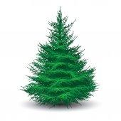 Green spruce tree — Stock Vector