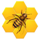 Bee on honeycombs — Stock Vector