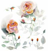 Vzor bezešvé akvarel růže — Stock fotografie