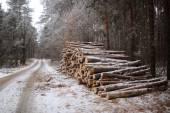 Logs in the wood at the road — Stock Photo