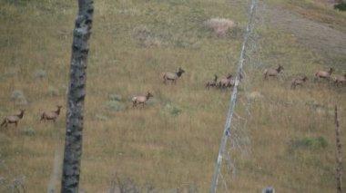 Deers  in a field — Stock Video