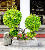 Decorative shaped trees on the temple — Stockfoto