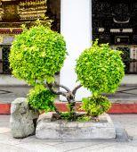 Decorative shaped trees on the temple — Foto de Stock