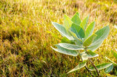 The green leaf tree near the rice field — Stock Photo