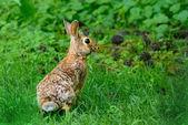 Grey hare in nature — Stockfoto