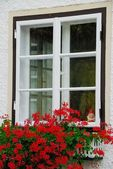 Window with red flowers — Stock Photo