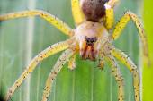 Spider  sits on green leaf — Stock Photo