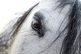 White horse in sunshine — Fotografia Stock