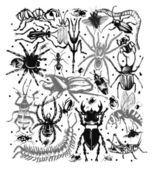 Black insects on an white paper — Stock Photo