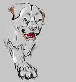 Large and aggressive dog — Stock Photo
