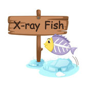 Animal alphabet letter X for x-ray fish — Stok Vektör