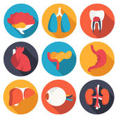Human organs icons — Stock Vector