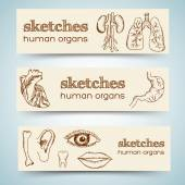 Human organs in sketches banners — Stock Vector