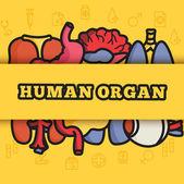 Human organs set icons — Stock Vector