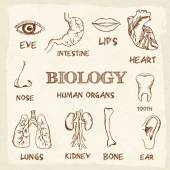 Human organs in sketches style — Stockvektor
