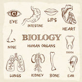 Human organs in sketches style — Stock Vector