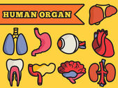 Human organs set icons — Stock Vector