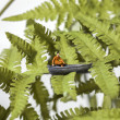 Tiny man sitting in a boat on a tree — Stock Photo #54549975