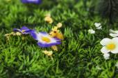 Tiny giraffe smelling artificial flower — Stock Photo