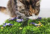 Cat crunching a plastic pine — Stock Photo