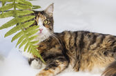 Cat hidden behind leaves and glancing up — Stock Photo