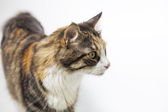 Cat looking aside — Stock Photo
