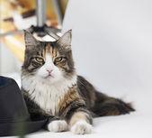 Cat looking at camera — Stock Photo