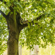 Squirrel on a tree branch — Stock Photo #55841189