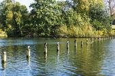 Lago serpentine — Foto Stock